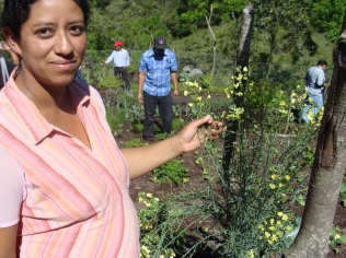 Patricia, one of the members of our Organic Kitchen Gardens Project, telling us a bit about these plants